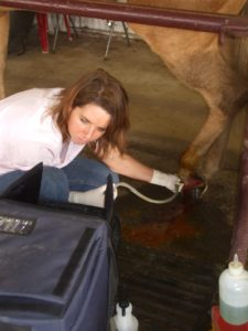 Ultrasounding a wound on the pastern area